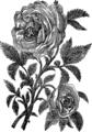 Роза (БЭАН).png