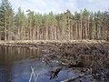 Рязанская область, река Пра, завал в районе деревни Горки.JPG