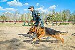 Собаки НГУ 4401 (19167113760).jpg