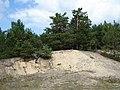 Сосновий ліс на піску в НПП Прип'ять-Стохід.jpg