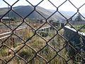 Արփենիի գերեզմանոցը և այդ տարածքի համար սովորական երևույթ դարձած հորթերի ներկայությունը.jpg