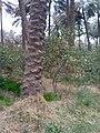 بستان نخيل في الخالص 115.jpg