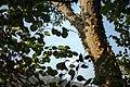 گیاهان در پاییز - باغ بوتانیکال تفلیس 14.jpg