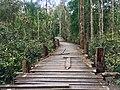 কাঠের তৈরী আঁকাবাঁকা রাস্তা, করমজল, সুন্দরবন!.jpg