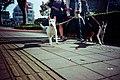 光が丘 Tokyo, Japan Kodak Pro Ektar Lomo LC-A+ (34078286773).jpg