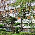 台大醫院 National Taiwan University Hospital - panoramio.jpg