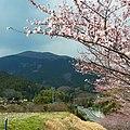 御所市井戸から葛城山を望む View toward Katsuragi-san 2012.4.07 - panoramio.jpg