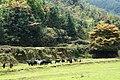新丰司茅坪林场20150412 - panoramio (36).jpg