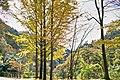 昇仙峡 - panoramio (14).jpg