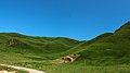 甘南藏族自治州Rerdaba grassland - panoramio.jpg