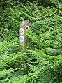 -2020-06-10 Waymarker, Footpath in the parish of Knapton, Norfolk (1).JPG