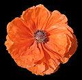 - Flower 19 -.jpg