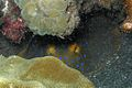12-EastTimor-Dive Bubble Beach 25 (Blue-spotted Stingray)-APiazza.JPG