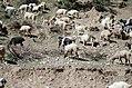 15 Kalam, Pakistan.jpg