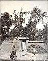 1907年9月8日宁阳一个果农家里的果树.jpg