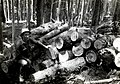 1936. White pine logs infested with Dendroctonus monticolae being decked for burning. Mt. Rainier National Park, Washington. (33339781342).jpg