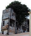 2012-Havanna Haus-Baum anagoria.JPG