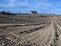 242 Vinyes vora el camí del Catllar (Renau), al fons el mas dels Set Pins (Vilabella).jpg