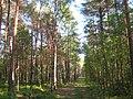 3072. St. Petersburg. Sosnovka Park.jpg