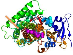 Protein moonlighting - Image: 3EL3