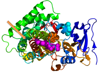 Protein moonlighting proteins performing more than one function