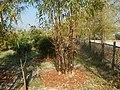 43Lubao Bamboo Hub & Eco-Park Santa Catalina Pampanga 30.jpg