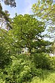 7 Eichen Kuhwasen 05.jpg