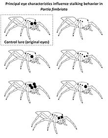 Sensory Systems/Spiders - Wikibooks, open books for an open world