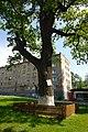 80-361-5027 Kyiv Vetrov Oak SAM 0033.jpg