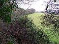 A Glimpse through the Hedge - geograph.org.uk - 99783.jpg