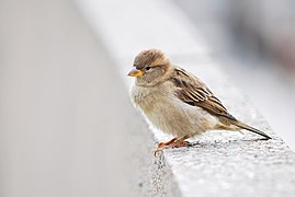 A Sparrow's World (50059137526).jpg