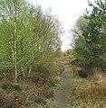 A narrow path through the heath - geograph.org.uk - 1253091.jpg