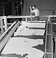 A workman at the Polymer Rubber Corp. guiding a synthetic rubber filter cake into the tearing rolls, October 1943 (4679199140).jpg