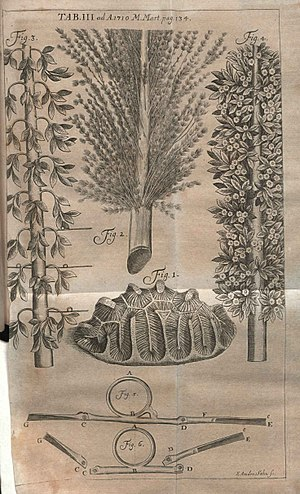 Hans Sloane - Illustration from critique of the first volume of A voyage to the islands Madera, Barbados, Nieves, S. Christophers and Jamaica, published in Acta Eruditorum, 1710