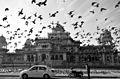 Albert Hall Jaipur (34525425476).jpg
