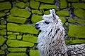 Alpaca By Diego Baravelli 04.jpg