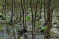 Altwarmbüchener Moor Juni 2017 06.jpg