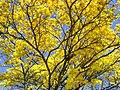 Amarelou - panoramio.jpg