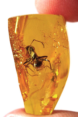 Amber (color) - Ant preserved in amber