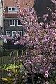 Amsterdam Noord 05 2013 - panoramio.jpg