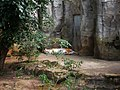 Amurtiger (Zoo Leipzig).jpg