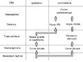 Anatomie du système somesthésique.png