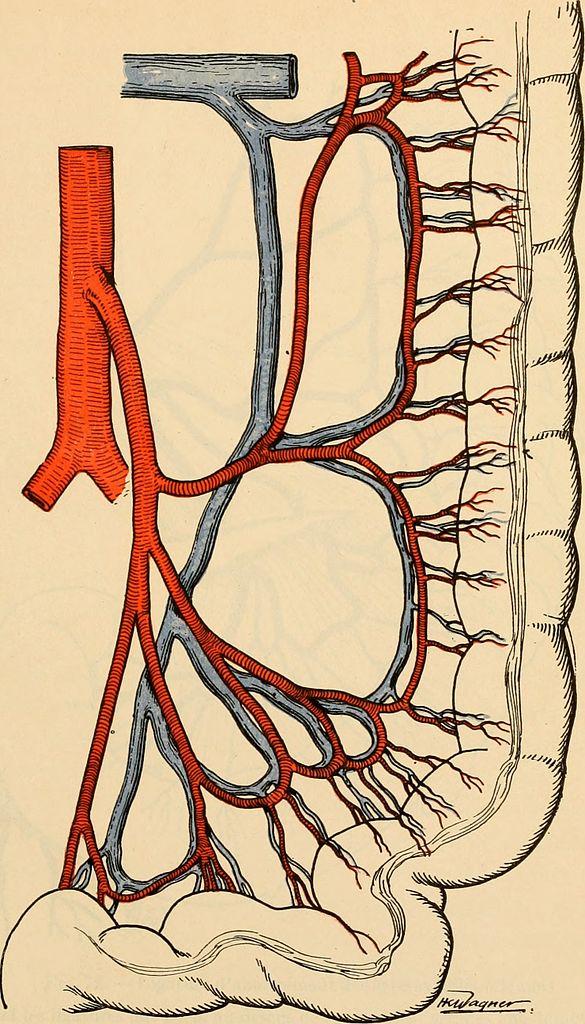 File:Anatomie médico-chirurgicale de l\'abdomen (1922) (14781773691 ...
