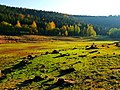 And Sometimes They Come Back - panoramio.jpg