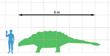 Outline of human superimposed on outline of Ankylosaurus