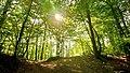 Annecy forest.jpg