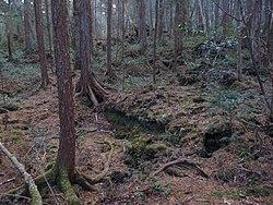 Aokigahara Forest (10863169686).jpg