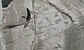 Apus pacificus -Japan -flying-8 (2).jpg