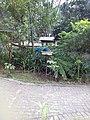 Arara azul em João Pessoa.jpg