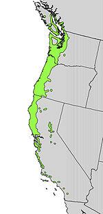 Arbutus menziesii range map.jpg